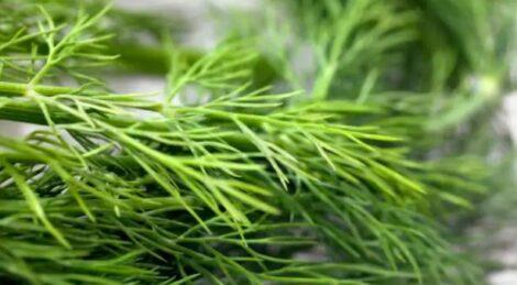 شوید، سبزی خشک و خشکبار فردوس ناب dried herbs dried vegetables