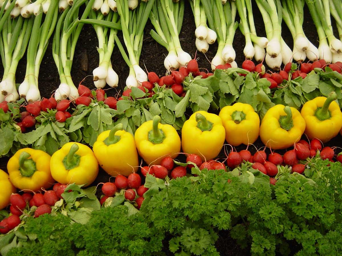 سبزیجات فاقد مواد مغذی – پایین آمدن کشاورزی مدرن