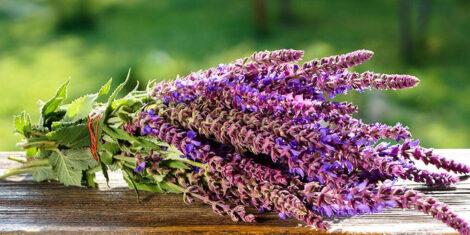 سبزی خشک ناب dried herbs dried vegetables