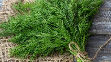 سبزی خشک و خشکبار ناب شوید