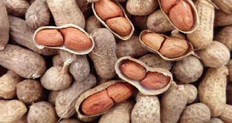 شرکت خشکبار و سبزی خشک فردوس ناب بادام زمینی